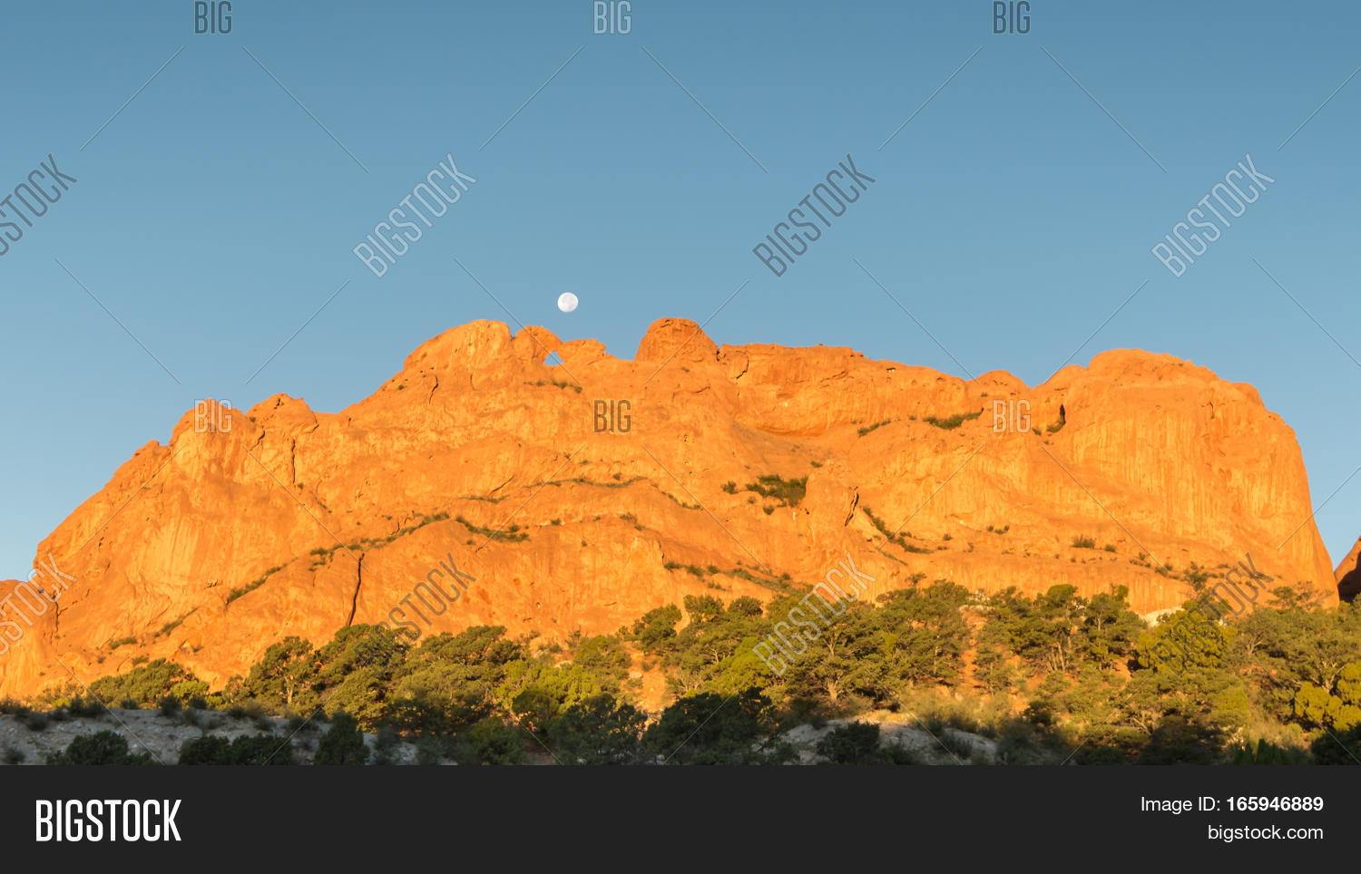 Kissing Camels Named Image Photo Free Trial Bigstock