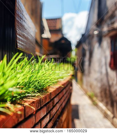 Bright Green Grass Beside Wall Of House On Narrow Street