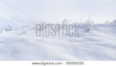 herbs under the white snow. On the surface not covered with snow seen plants
