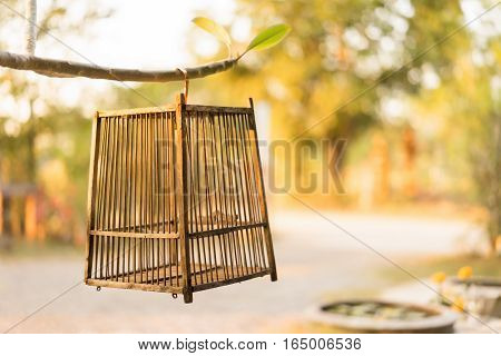 Empty bird cage hanging on a tree in sunset light freedon concept.