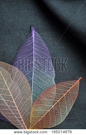 Above of colorful skeleton leaves on gray fabric
