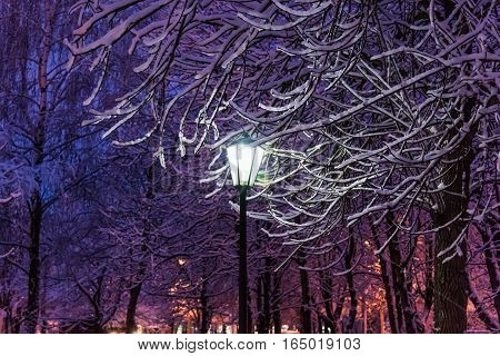 Lantern Night Snow Tree