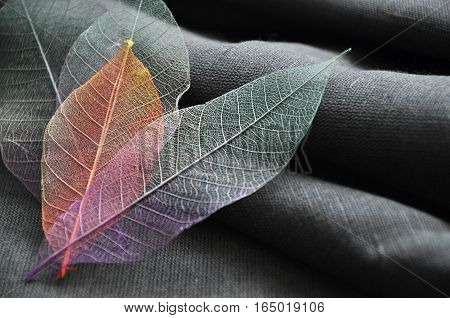 Close up color skeleton leaves put in heart shape on gray fabric