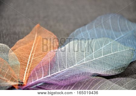 Close up colorful skeleton leaves on background