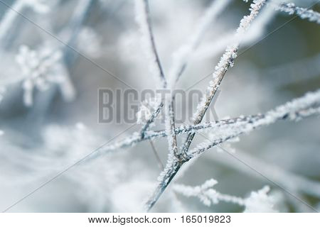 Beautiful winter tree branch covered in ice frost crystal season background
