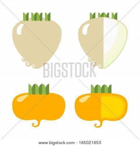 Root vegetables: celery and turnips a general view and in section on a white background