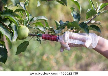 Genetically modified apple. Needle and syringe injecting representing genetically modified fruit.