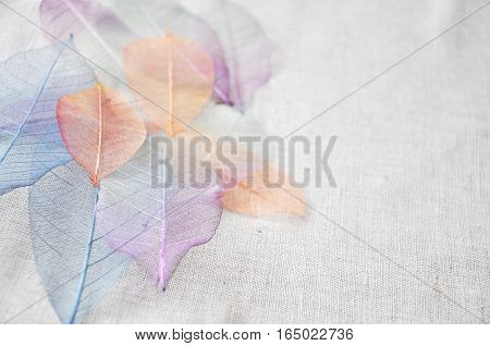 Colorful skeleton leaves on background point to you with empty space for text