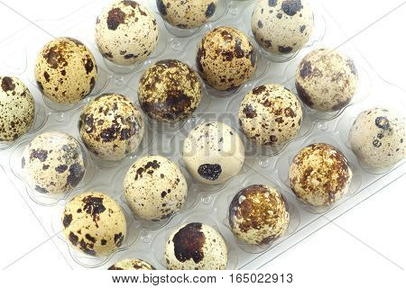 Many mottle quail eggs in plastic packaging cells isolated closeup diagonal view