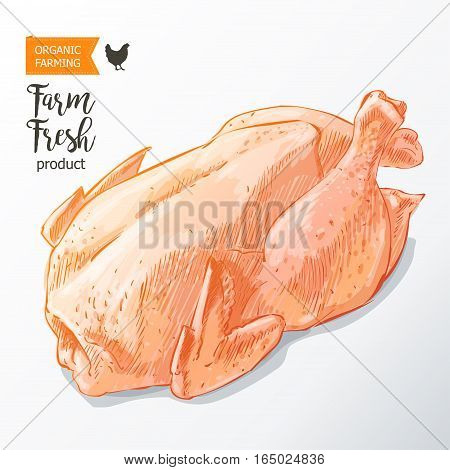 Fresh row chicken meat. Top view. Isolated on a white vintage vector isolated sketch hand drown watercolor