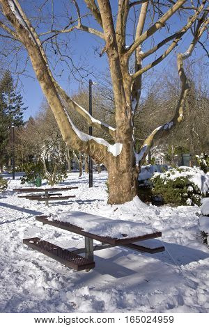 Large tree branches and picnic tables in a public park Oregon.