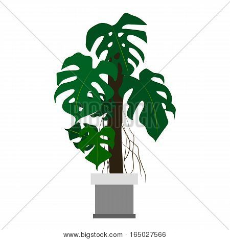Monstera houseplant. Home flowers made in flat style. Vector illustration.