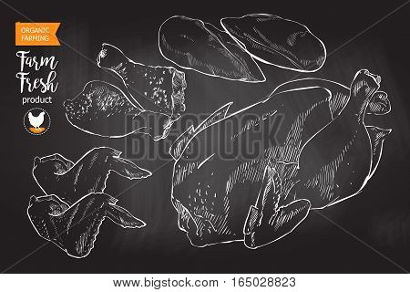Fresh row chicken meat divided into parts. Isolated on a white vintage vector sketch hand drown chalk drawing on the blackboard