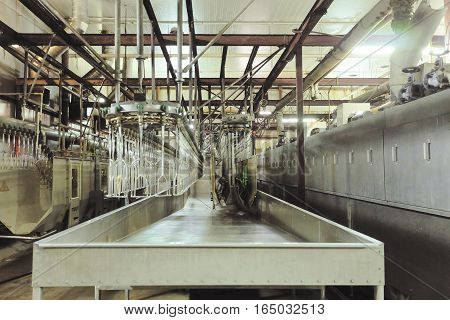 Chicken factory line. Standard equipment slaughterhouse and poultry processing. Suspended conveyor receiver for stunning poultry current bathroom.
