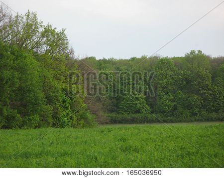 May cloudy evening, large glade and forest
