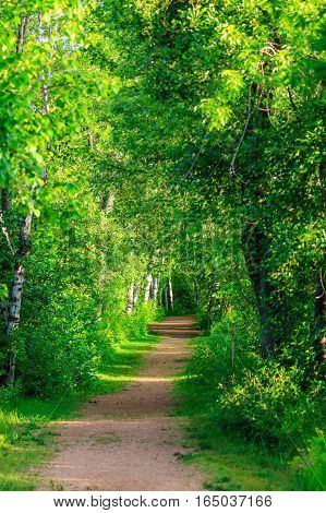 Walking path on a sunny day in a Wisconsin park.