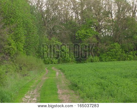 May landscape with the forest, glade and road