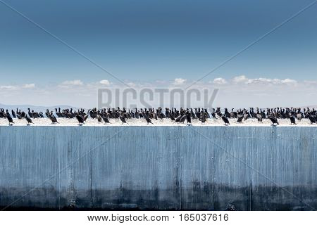 Cormorant birds on harbour wall at Robben Island