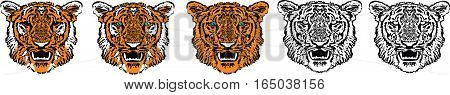 Five tigers close up, redhead, striped, black and white, transparent, green eyes on white background, isolated, vector