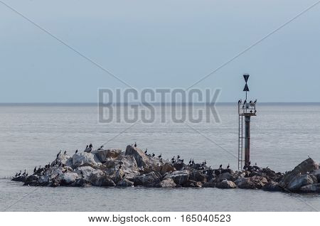Birds nest among the rocks of an Australian beach during the summer.