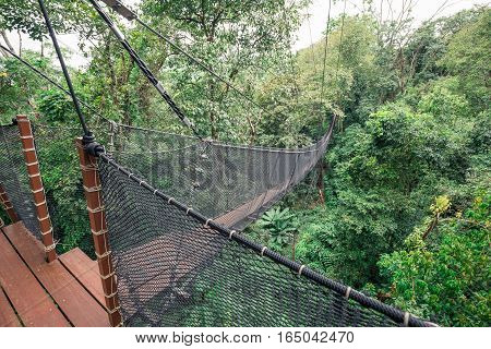 Wooden bridge and balcony connecting between big tree for sight seeing on top tree of tropical forest. Bridge's wall made by nylon net.