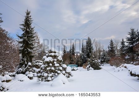 Beautiful Winter Garden Covered By Snow
