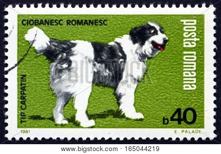 ROMANIA - CIRCA 1981: a stamp printed in Romania shows Carpathian Shepherd Dog Mountain Sheepdog is a Breed of Large Sheep Dogs circa 1981