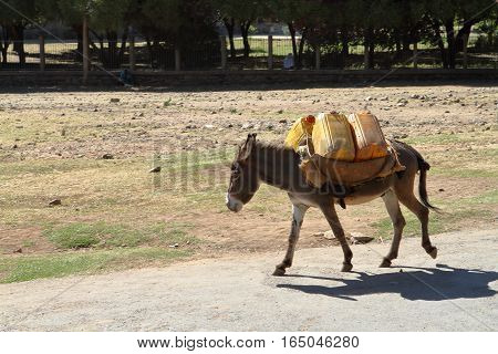 Goods transport with a donkey in Ethiopia