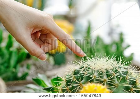 Female finger touching prickly green cactus on nature background