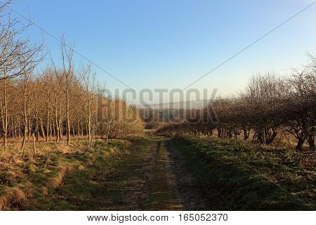 A farm track by woodland and hedgerows under a clear blue sky in winter.