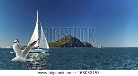 Yacht sailing past Yacaaba Head with a seagull flying by in the foreground. This image was photographed from the deck of a cruising yacht at Port Stephens entrance New South Wales Australia.