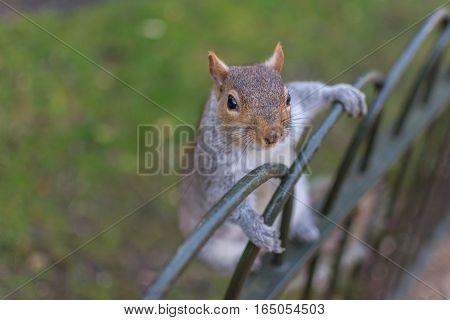Squirrel On Railings