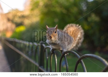Squirrel On Railings