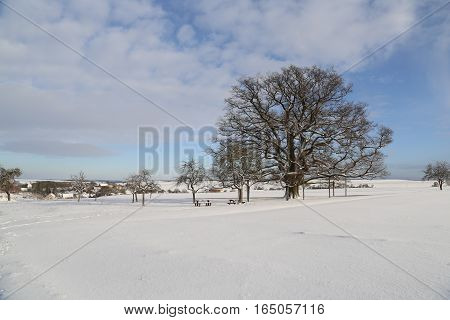 Winter Landscape / Millennium oak near Sichertshausen (Germany)