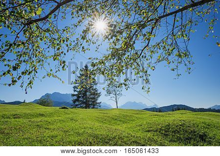 Crooked Pasture In The Bavarian Alps, Bright Springtime Landscape