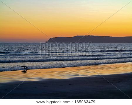 A sunset over the ocean with a seagull