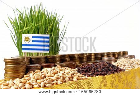 Uruguay Flag Waving With Stack Of Money Coins And Piles Of Wheat And Rice Seeds
