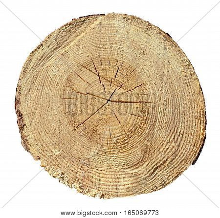 Tree Rings, Wood, Log. Wooden Texture