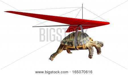 Funny turtle flying on hang-glider isolated on white
