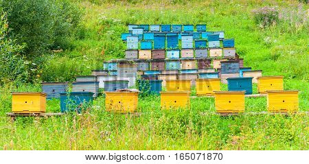 Row of Colorful Bee Hives with Trees in the Background. Wooden Honey Beehives in the Meadow.