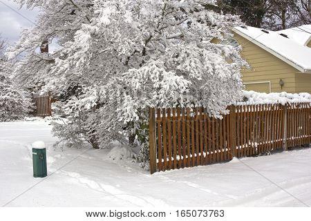 Winter scene tree and fence in Gresham Oregon.