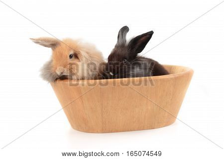 Cute Holland Lop Rabbits In Wooden Bowl Isolated On White