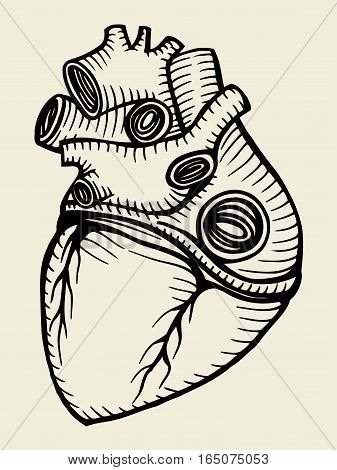 Hand drawn human heart sketch. Vector illustration