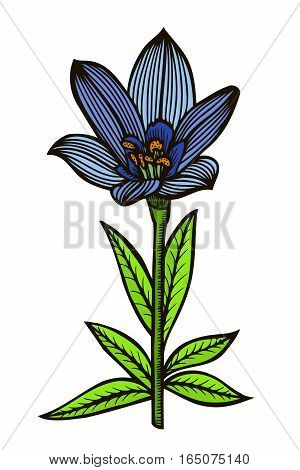 blue spotty lily. Vector illustration isolated on white