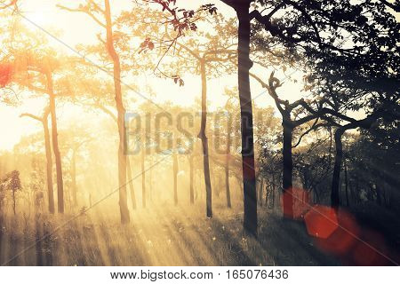 Soft Focus Of Misty Forest After Rain With Ray At Sunset, Abstract Fantasy Nature Background.