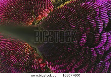 A macro image of a hummingbird shows the details in its head feathers.