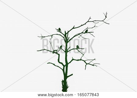 Silhouette of four birds on dying tree in dark green tone isolated on white background. Concept of environment conservation.
