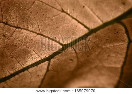 An infrared image of a leaf renders it in gold tones revealing it's vascular structures