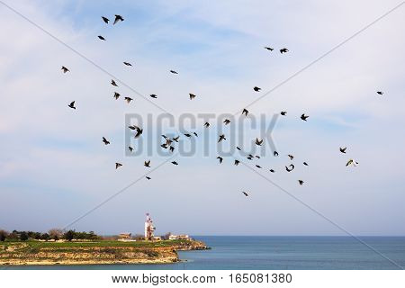 flock of starlings in flight over the coast