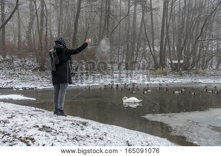 A young woman feeding on a lake swans and ducks Bird feeding in winter 9